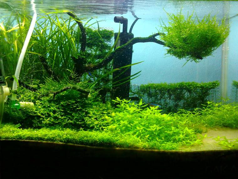 Aquascape warung ganang - Gambar aquascape ...